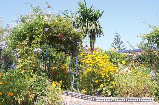 L'Hippocampe: Gartenanlage