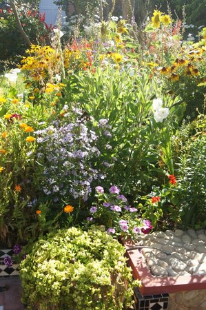 L'Hippocampe : Garten