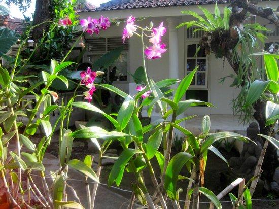 Gardenia Guesthouse: pretty garden