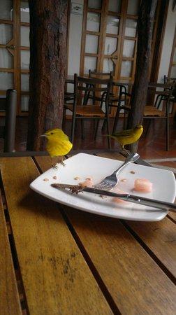 Hotel Galapagos Suites: Desayunando en compañia