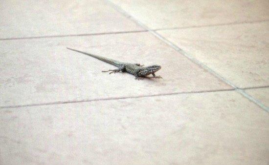 Agriturismo Le Case di Campagna: Resident Lizard