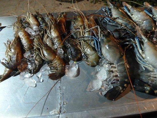 Lucky Tuna: Giant prawns
