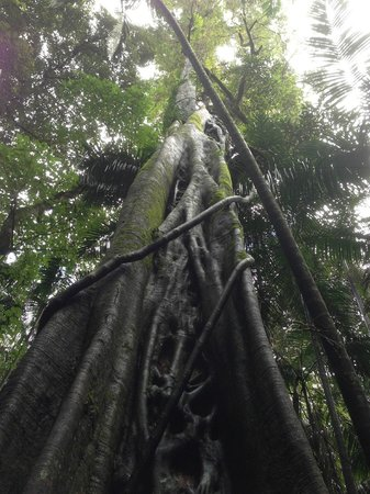 Southern Cross 4WD Tours: Amazing rainforest walk