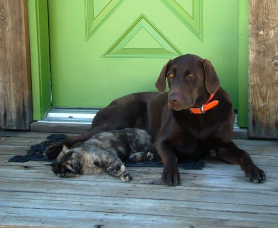 Morley's Acres Farm and Bed & Breakfast: Best Friends