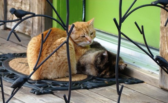 Morley's Acres Farm and Bed & Breakfast : Cat Pile
