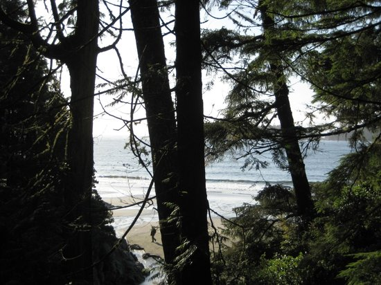 Gull Cottage Bed & Breakfast: NATURE WALK IN THE RAIN FOREST