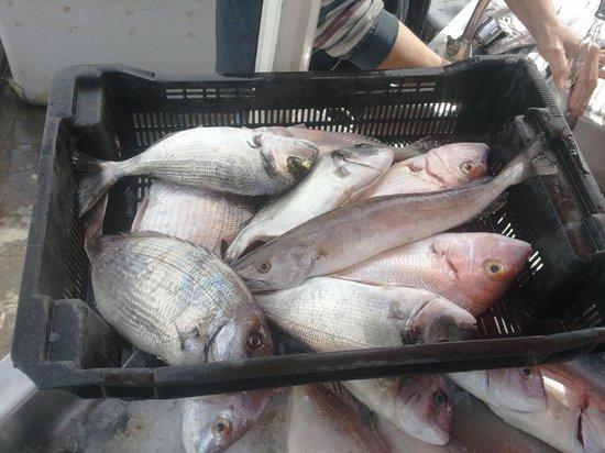 La Marine du Port : pêche locale du jour