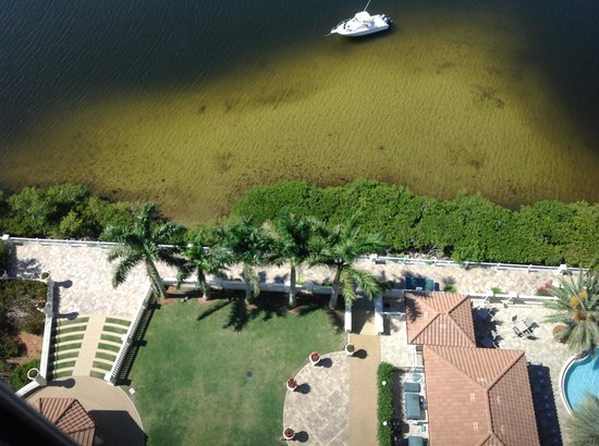 The Westin Cape Coral Resort At Marina Village : My husband fishing at the foot of the hotel. HUGE snook, dolphin, manatee, all,could be seen  fr
