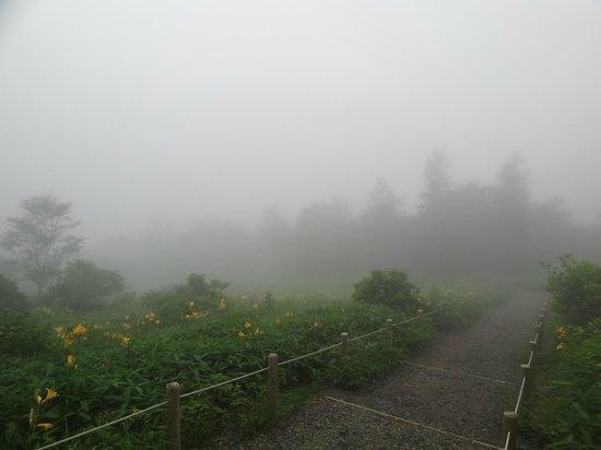 Kirifuri Highlands Kisuge Plain : キスゲ平園地遊歩道