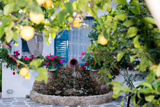 Studios Tasia: garden