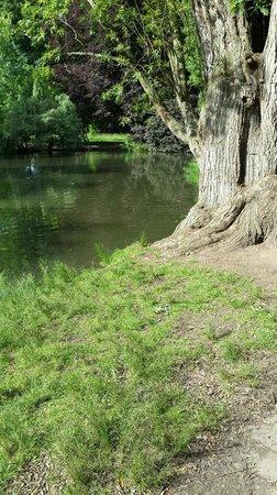 Botanischer Garten: Estanque de patos