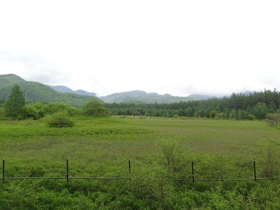 Odashirogahara Field: 小田代ヶ原