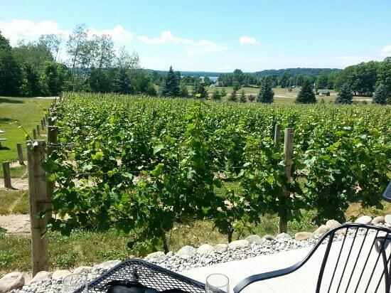 Bowers Harbor Vineyards: view