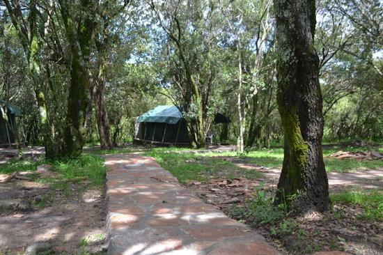 Wajee Mara Camp: Paths are paved