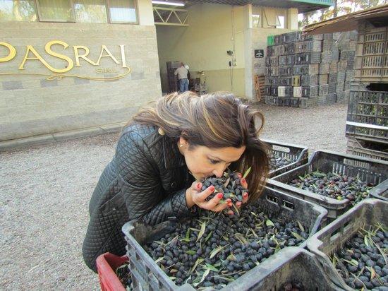 Olive Boutique PASRAI : E possivel acompanhar o esmagamento e filtragem do azeite