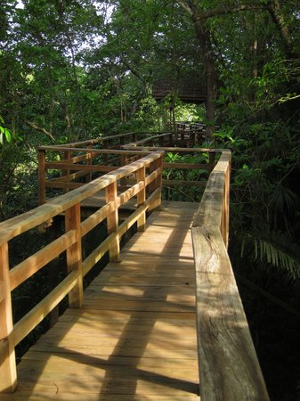 duPlooy's Jungle Lodge: Elevated walkway to bird viewing deck