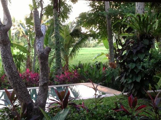 Villa Pantulan: View of the rice fields