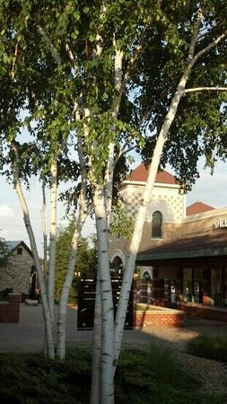 Grove City Premium Outlets: birch tree at outlet mall