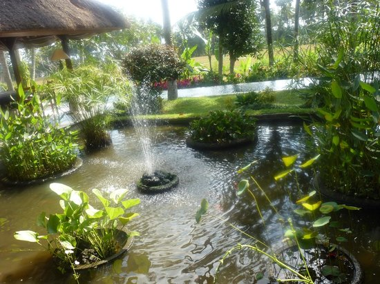 Villa Pantulan : View across the lotus pond