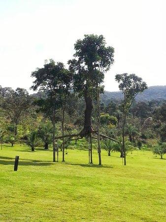 Inhotim : Árvore Suspensa