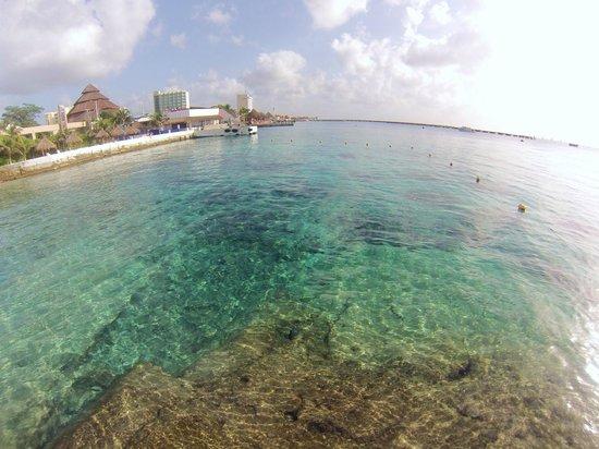 Casa del Mar Cozumel Hotel & Dive Resort: Swim area at Casa Del Mar
