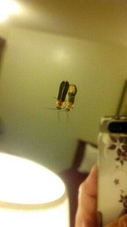 Days Inn Wytheville: a lightening bug that popped in our room. cool