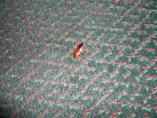 Quality Inn: Cockroach #2