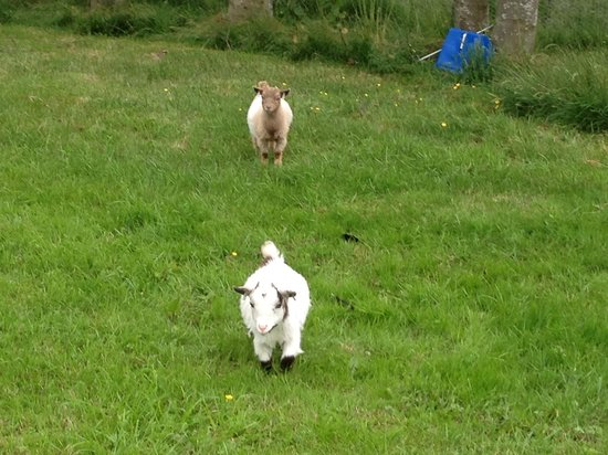 Fenton Hill Farm Cottages: Dylan and zebedee!