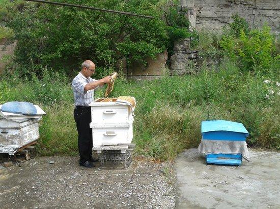 B&B Iris: bijenkasten