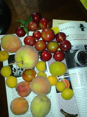 Neemrana's - Ramgarh Bungalows: Fruits from the orchards in hotel