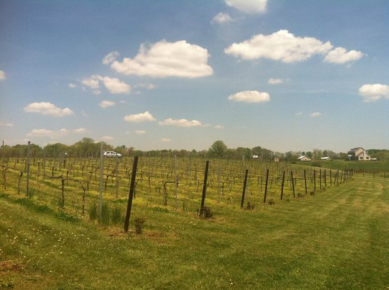 Molon Lave Vineyards : Out in the vineyard.