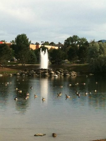 DoubleTree by Hilton Hotel Colorado Springs: Pond next to hotel property