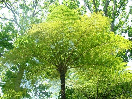 Alberi e piante rari foto di giardini la mortella forio tripadvisor - Foto di alberi da giardino ...