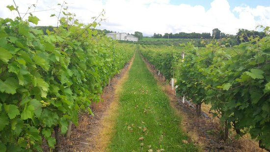 La Route des Vins: Vignoble Gagliano Vineyards