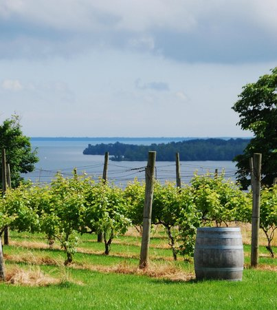 The County Cider Company: The view from County Cider Company's outdoor patio