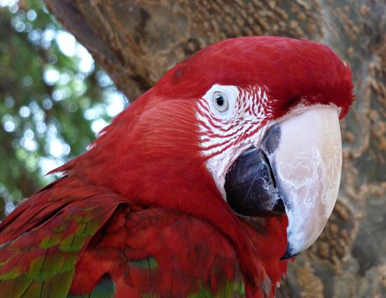 Curacao Zoo & Nature Reserve : The Zoo's sweetheart ..