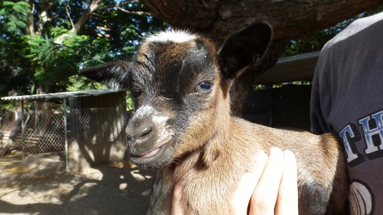 Curacao Zoo & Nature Reserve : Newborn baby ...