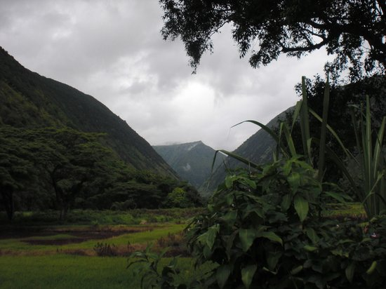 Waipi'o On Horseback: one view of the valley