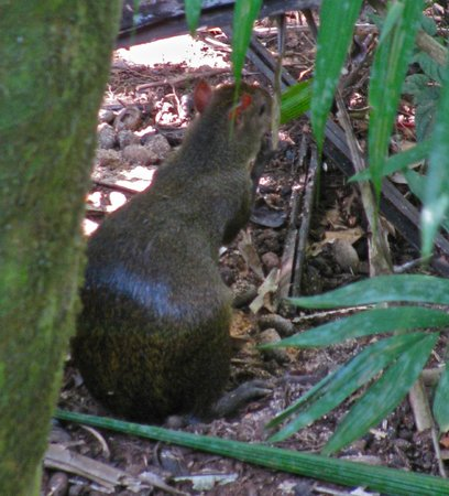 Gamboa Rainforest Resort Aerial Tram Tour: wildlife!