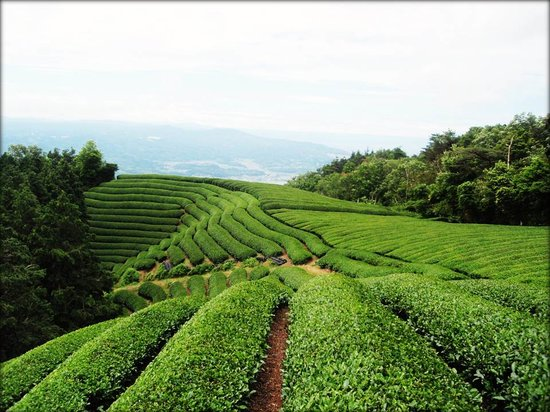 Coffee & Tea Tours