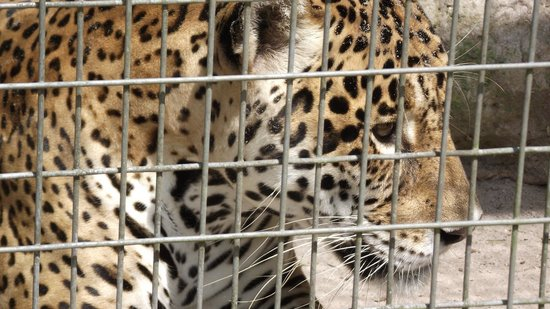 Zoologico Manaus Tropical
