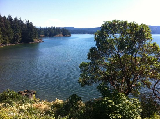 Arbutus Cove Guesthouse: View from deck