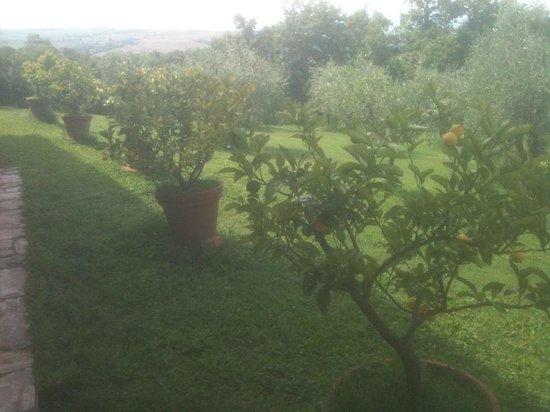 Agriturismo Cerreto: Limones