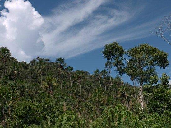 Kosnipata Valley: Manu rainforest