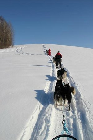Valga County, Estonia: 5 day sleddog expedition