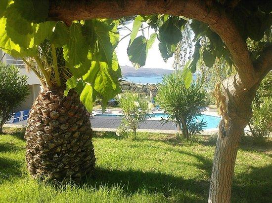 Hotel Eleftheria : ΚΗΠΟΣ ΕΓΚΑΤΑΣΤΑΣΕΙΣ