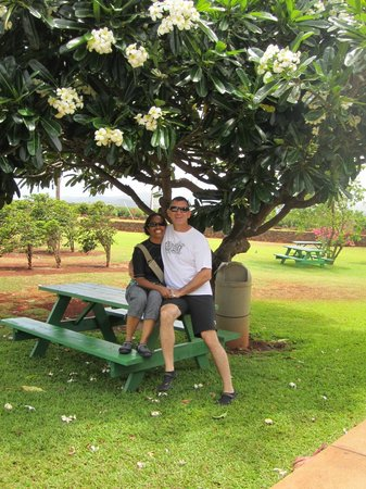 Kauai Coffee Company: Outside Grounds