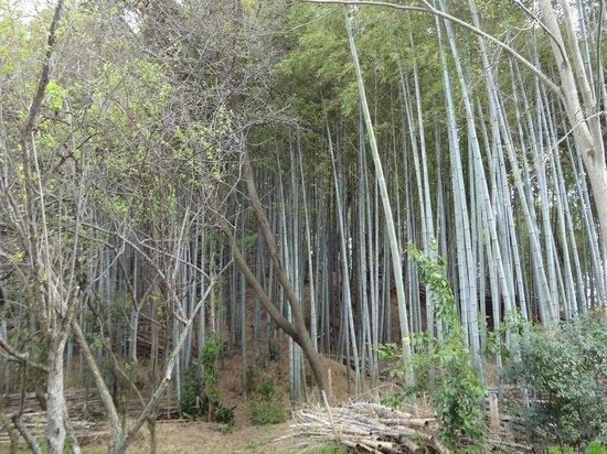 Kutsugawa Kurumazuka, Maruzuka Tombs
