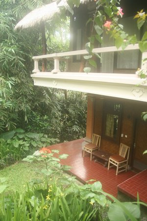 Matahari Cottage Bed and Breakfast: rainforest setting