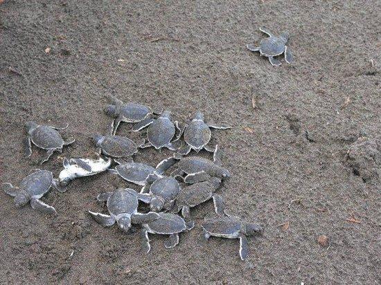La Perla del Caribe: Tortuguero National Park